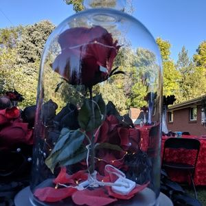 Other - Rose lantern from beauty and the beast